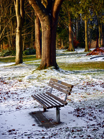 A Stanley Park bench surrounded by winter snow in Vancouver, BC, Canada