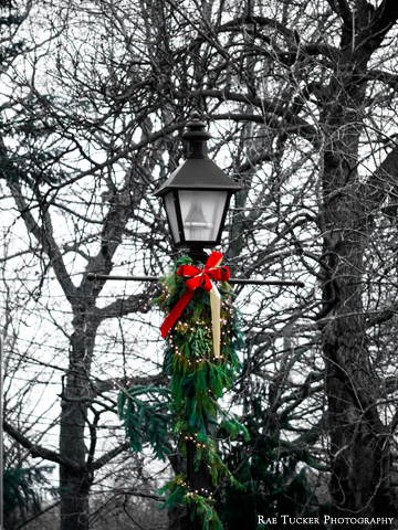 A lamp post decorated with cedar bows and ribbon for the Christmas season