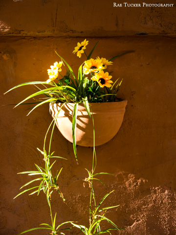 A clay wall pot holds flowers and plants in Rome, Italy