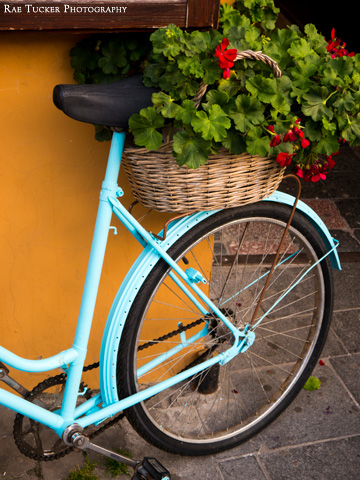 A blue bicycle carries a wicker basket filled with a geranium plant