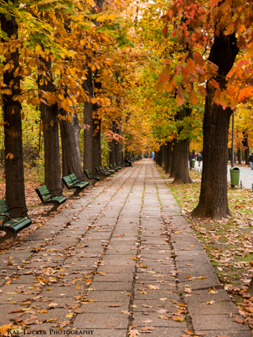 A walkway running through a park during the autumn in Bucharest, Romania