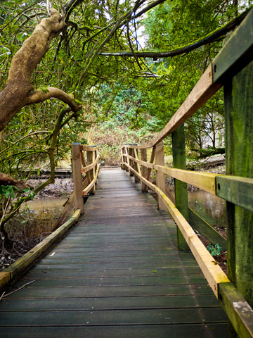 A wooden boardwalk through a forested area of Blarney Castle.