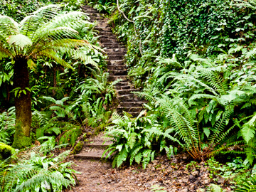 Stone stairs in the fern garden of Blarney Castle.