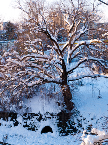 The golden rays of the sun illuminate a tree by the river in Sofia, Bulgaria in the winter