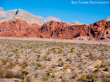 The desert landscape in Red Rock Canyon