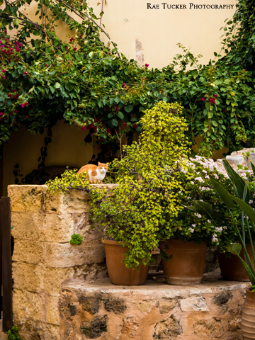 Potted plants and a stone wall provide a hiding space for a ginger-colored cat.