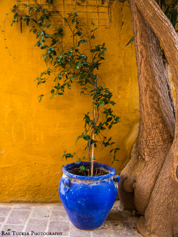 A blue, plant pot stands out against a yellow wall.