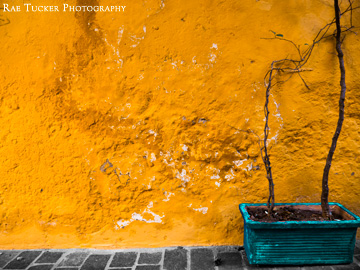 A yellow, stone wall hosts a turquoise-potted plant.