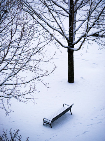 A bench in a snowy, quiet park
