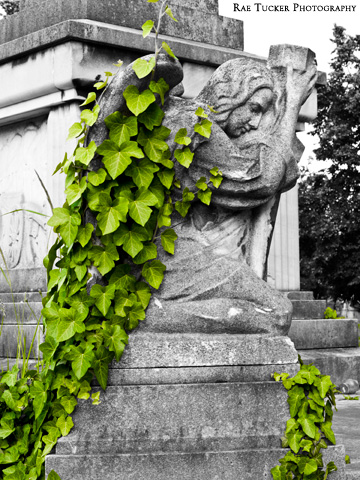 A black and white image of a stone angel with green ivy climbing over her wings in a cemetery in Budapest, Hungary