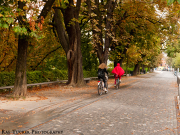Bicyclists ride under autumn trees