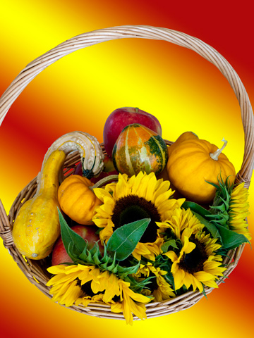 Sunflowers, pumpkins, gourds and apples in a wicker basket