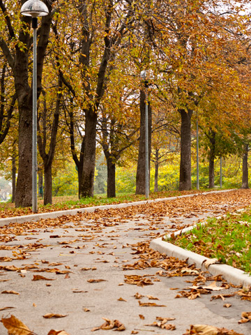 A path through Parco Montagnola in Bologna, Italy in the autumn