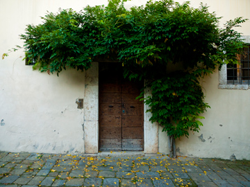 A wooden medieval door adorned with a tree in Arezzo, Italy