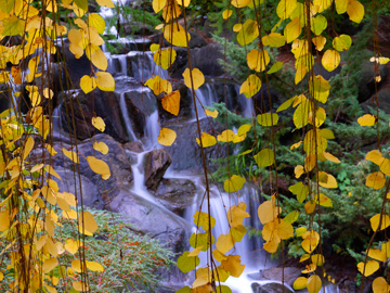 Autumn leaves in front of a waterfall in Van Dusen Gardens in Vancouver, Canada