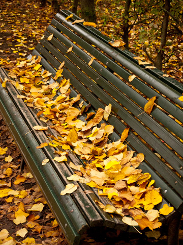A park bench during the autumn in Parma, Italy