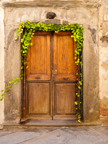 A wooden door is adorned with a crawling vine in Cortona, Italy