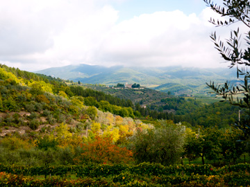 The golden hills of Tuscany roll through the autumn fog and colors..