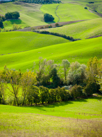 Rolling green hills in Tuscany in the autumn.