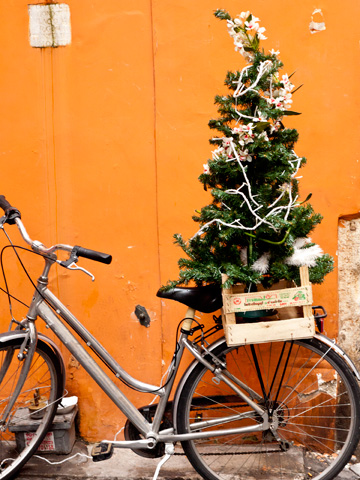A bicycle carrying a Christmas tree in Rome, Italy