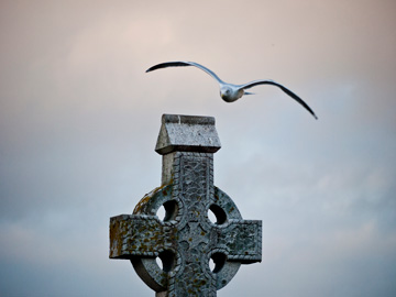 A seagull flies over a celtic cross in Ireland