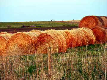 Haybales are a typical icon of prairies in Alberta, Canada