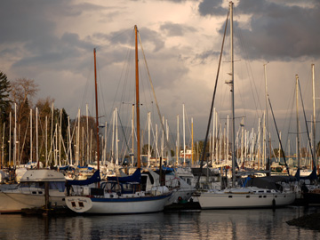 Sail boats docked at a Stanley Park harbour in Vancouver, BC