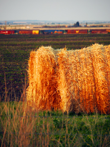 Hay bales in the forefront with a train traveling in the background in Alberta, Canada