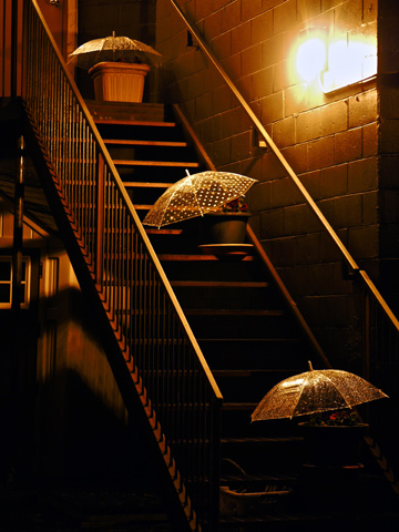 A stairway with umbrella covered plants