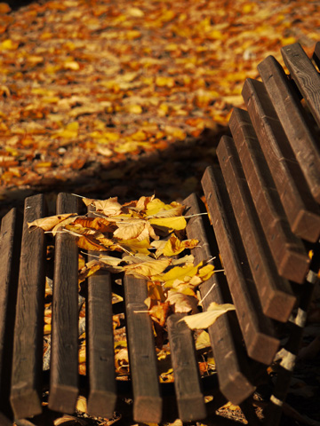 Park bench littered with autumn leaves
