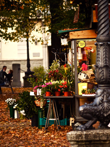 A flower and plant stall in a park during autumn in Florence, Italy