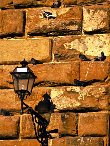 This lantern adorned wall provides a nice perch for pigions on the Pitti Palace