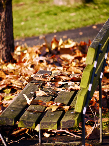 A wooden bench is covered with fallen autumn leaves in Vancouver, Canada