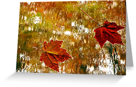 Rainy Maples Leaves Greeting Cards