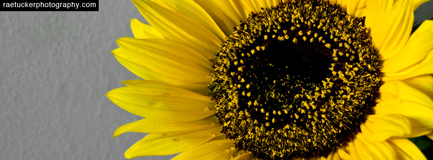 Sunflower Facebook Banner Download