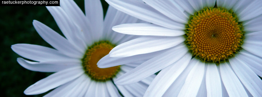 Daisy Free Facebook Banner