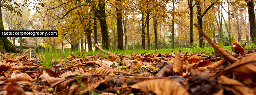A park in Parma, Italy in autumn free facebook banner