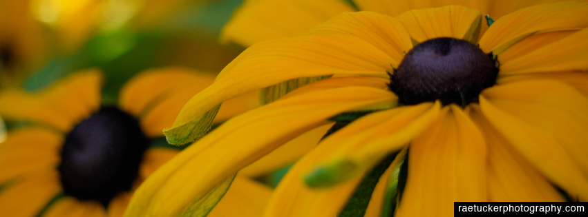 Yellow Flowers Free Facebook Banner
