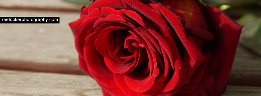 A red rose free facebook banner