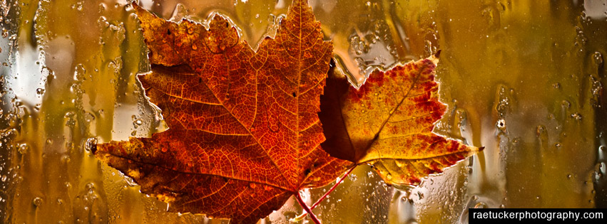 Autumn Maple Leaves Free Facebook Timeline Banner